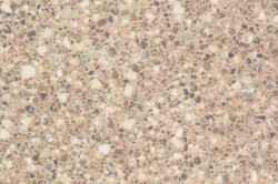 Sand Crystal - Custom cabinet color & countertops
